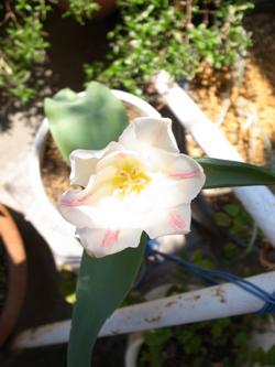 g.g.flower.jpg