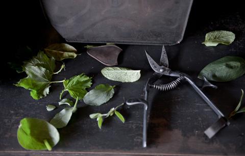 TAjiKA 「garden clipper」